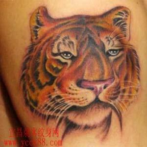 一款霸气帅气的手臂彩色老虎虎头纹身图案纹身图片